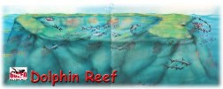 Dolphin Reef-2
